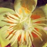 Gul wild blomma Royaltyfri Foto