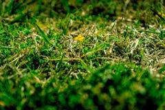 Gul wild blomma arkivfoton