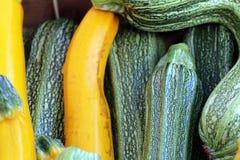 Gul zucchini och gräsplanzucchini arkivbilder