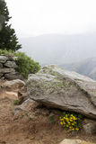 Gula alpina blommor som beskyddas under en vagga Royaltyfria Foton