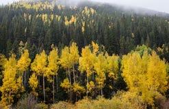 Gula asp- träd i Colorado berg Royaltyfri Bild