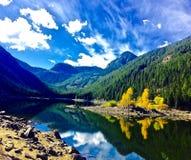 Gula aspar reflekterar av den klara lugna sjön royaltyfria foton