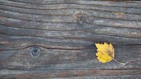 Gula Autumn Leaf på ett träkorn texturerade yttersida royaltyfri foto