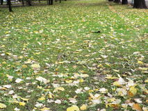Gula blad på grönt gräs Arkivfoto
