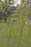 Gula blomma h?ngear royaltyfria foton
