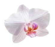 Gula blommaorkidér royaltyfri fotografi