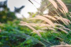 Gula blommor i den regniga säsongen på solsken arkivfoto