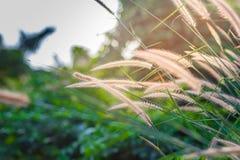 Gula blommor i den regniga säsongen på solsken royaltyfri fotografi