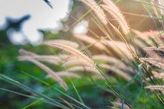 Gula blommor i den regniga säsongen på solsken fotografering för bildbyråer