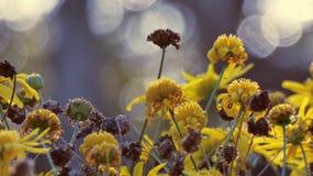 Gula blommor med suddig bakgrund 02 royaltyfri foto