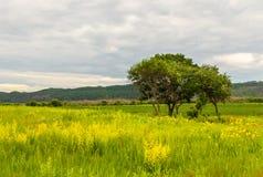 Gula blommor och ett träd på bakgrunden av avlägsna kullar royaltyfri foto