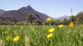 Gula blommor på det spanska bergfältet på vår stock video