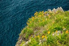 Gula blommor p? dekolletagen mot havet royaltyfri foto