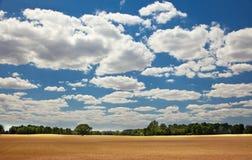 Gula bönder mognar fältet för kornskörden Arkivbilder