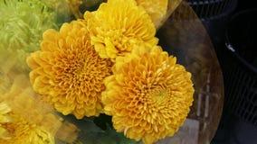 Gula Crysanthemum Arkivfoton