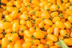 Gula druvatomater, den nya körsbäret behandla som ett barn tomater Arkivbild