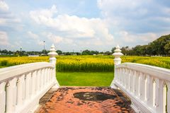 Gula fält av Crotalariajunceasunnhampa och den lilla vita bron på Phutthamonthon allmänhet parkerar, det Nakhon Pathom landskapet royaltyfria bilder