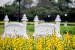 Gula fält av Crotalariajunceasunnhampa och den lilla vita bron på Phutthamonthon allmänhet parkerar, det Nakhon Pathom landskapet arkivbilder