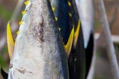 Gula fenatonfiskar som är utsatta på försäljning från fiskare Royaltyfria Bilder
