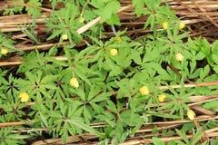 Gula Forest Flowers Arkivbild