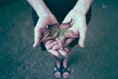 Gula höstsidor i gömma i handflatan av en flicka royaltyfri fotografi