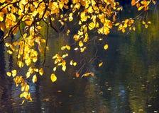 Gula höstsidor med reflexion på dammet bevattnar bakgrund arkivbilder