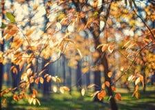 Gula höstsidor på ett träd Arkivbild