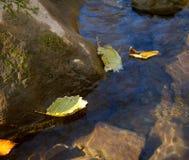 Gula höstsidor på vattenyttersidan Royaltyfria Bilder