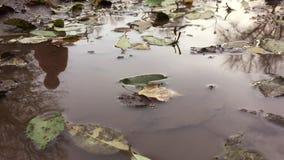 Gula höstsidor som svävar i pöl av vatten, är regnnaturen lager videofilmer