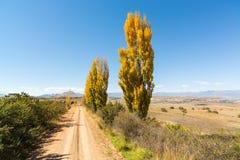 Gula höstträd bredvid spåren royaltyfria bilder