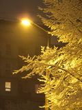 gula januari fotografering för bildbyråer