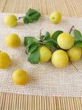 Gula körsbärsröda plommoner Arkivbilder