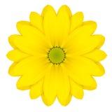 Gula koncentriska Daisy Flower Isolated på vit. Mandala Design Arkivfoto