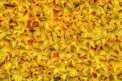 Gula konstgjorda blommor Arkivbilder