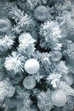 Gula kottar på vitbakgrund Fotografering för Bildbyråer
