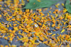Gula kronblad på jordningen closeup Makro Royaltyfri Bild