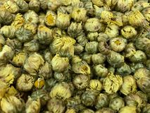 Gula krysantemumblommor, Dendranthemamorifolium som naturlig bakgrund, bitterhet och söt smak Har en kall drogeffekt royaltyfria foton