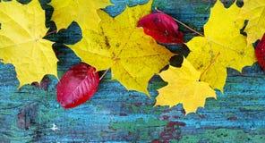 Gula lönnlöv och röda sidor på en gammal träblått arkivfoton