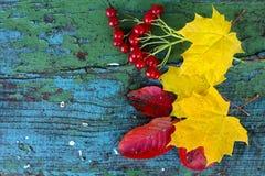 Gula lönnlöv, viburnumbär och röda sidor på en gammal träblått royaltyfria foton