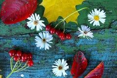 Gula lönnlöv, vita blommor, viburnumbär och röda sidor på en gammal träblått royaltyfria foton
