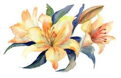 Gula liljablommor Arkivfoto