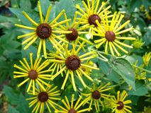 Gula liten solblommor Royaltyfria Bilder