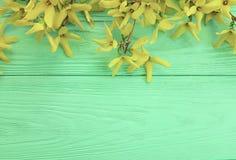 gula nya höstblommor gränsar på mintkaramellträtexturbakgrund Arkivfoto