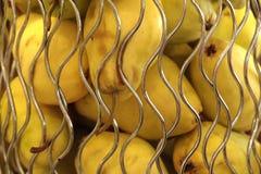 Gula nya päron i en metallvas Mycket gula päron på skyltfönstret i lagret arkivbild