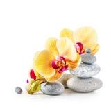 Gula orkidéblommor och brunnsortstenar Royaltyfri Fotografi