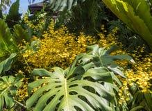 Gula orkidér med ormbunkar Arkivfoto