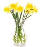 Gula påskliljar i en vase Fotografering för Bildbyråer