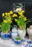 Gula påskliljor i en blomkruka Fotografering för Bildbyråer