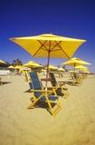 Gula paraplyer och strandstolar Royaltyfri Bild