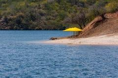 Gula paraplyer på marginalen för flod` s royaltyfri fotografi